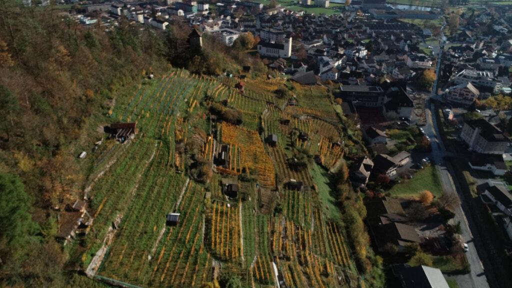 Luftaufnahme von Rebberg in Niederurnen