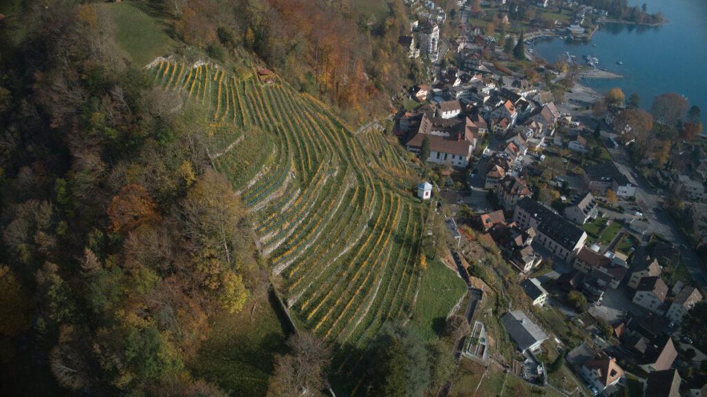 Luftaufnahme von Rebberg in Weesen